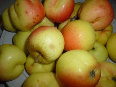 яблочки с лесной яблони